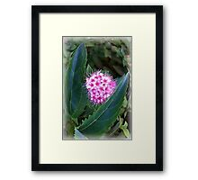 green and pink Framed Print
