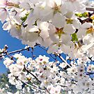 Blossom Time - Products by shiraz