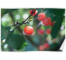 Just Cherry  Poster