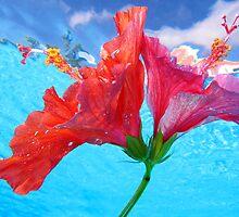 Floating Hibiscus by Alex  Bramwell