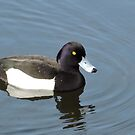 Tufted Duck by CreativeEm