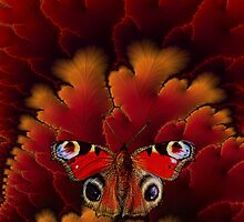 Butterfly on Red by © Kira Bodensted