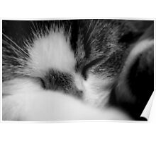 cats;family pet sploge.. Poster