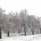 Ice Covered Tree's by Linda Miller Gesualdo