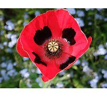 Pretty Poppy  Photographic Print