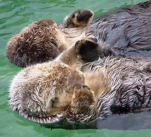 Otters Holding Paws by AnnDixon