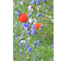 Wildflower Flurry Photographic Print