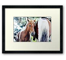Eowyn - Grayson Highlands pony mare Framed Print