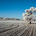 December Frost by David Dean