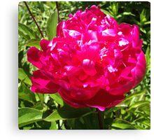 Deep Pink Peony Flower Canvas Print