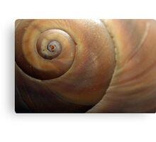 Sea Shell Detail Canvas Print