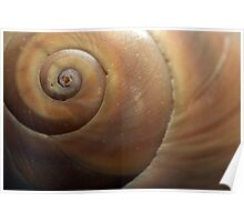 Sea Shell Detail Poster