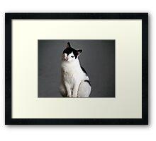 "Clifford... The ""Misunderstood"" cat Framed Print"