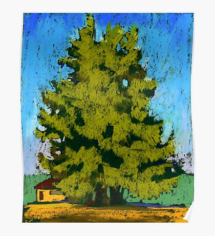Cedar trees in Vancouver Poster