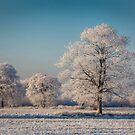 Let It Snow, Let It Snow, Let It Snow ! by geoff curtis