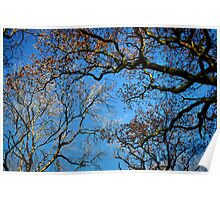 Blue Sky Trees Poster