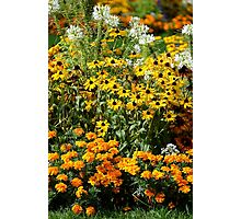 Flower Patch Photographic Print