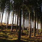 Newborough Forest by nellie11