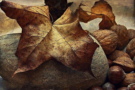 Autumn - a still life study by Julesrules