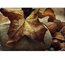 Autumn - a still life study Photographic Print