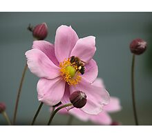 Work, Work, Buzz! Buzz! Photographic Print