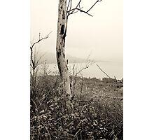 Misty morning on Lake Michigan Photographic Print