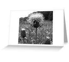 Snow Top Thistle Greeting Card