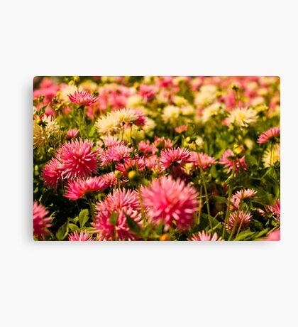 Butchart Garden Beauty Canvas Print