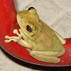 Tree Frog by mlaikens