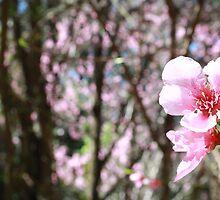 Pretty Blossoms by Natasha Crofts