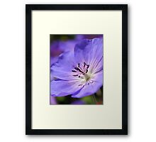 Purple Flower In Bloom Framed Print