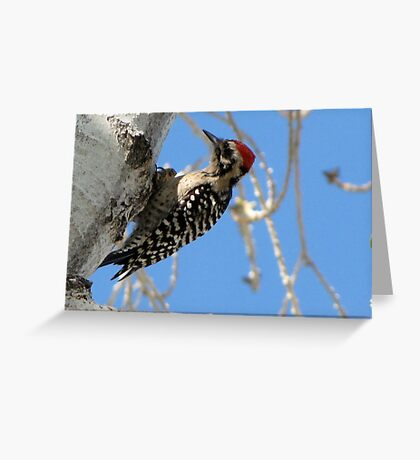 Ladder-backed Woodpecker ~ Male Greeting Card