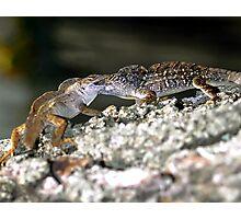Battling lizards Photographic Print