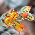 Orange Stars by Helen K. Passey