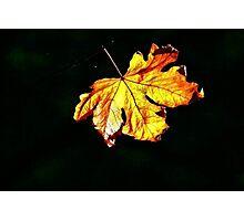 Leaf Light Photographic Print