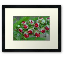 Natures Christmas Baubles Framed Print
