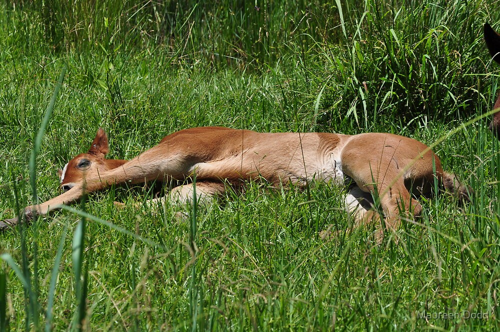 Plumb Tuckered Out. by Maureen Dodd
