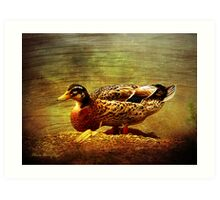 Along the backwater Art Print