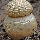 Strange Summer Fungi - Morwell National Park by Bev Pascoe