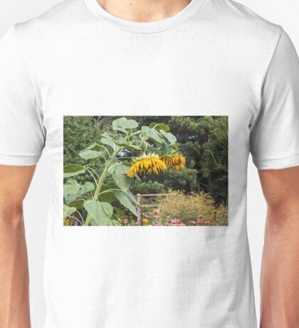 Wilted Sunflowers in Garden Unisex T-Shirt