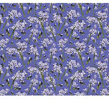 Bluebells and Busy Bees Photographic Print