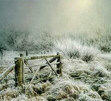 Heavy Frost by Tarrby