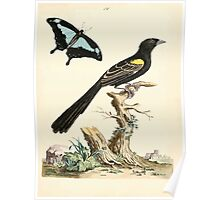 New Illustrations of Zoology Peter Brown 1776 0057 Birds Poster