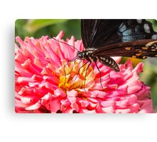 Butterfly on Pink Canvas Print