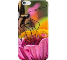 Tiger Swallowtail with Tattered Wings  iPhone Case/Skin