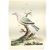 New Illustrations of Zoology Peter Brown 1776 0091 Birds Poster