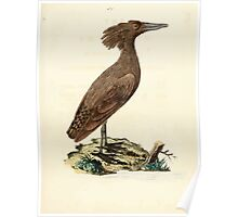 New Illustrations of Zoology Peter Brown 1776 0171 Birds Poster