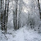 Winter in the Woods by artsandherbs