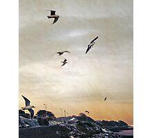 Seagulls at dawn, Clevedon, UK Photographic Print