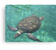 Flying turtle Canvas Print